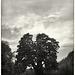 Sept 15: tree and setting sun