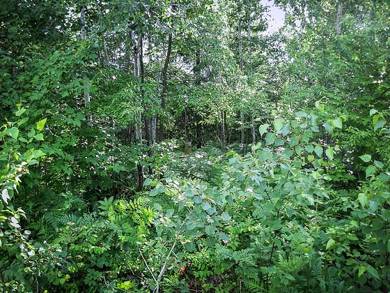Nipissing Region - Hide'n'Seek in Ontarios Woods 2007 (PiP)
