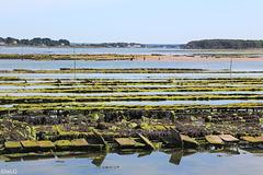 Ria d'Etel, Bretagne