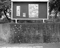 Neighborhood bulletin board
