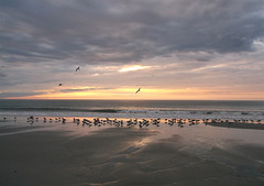 Lever de mouettes / Seagulls awakening