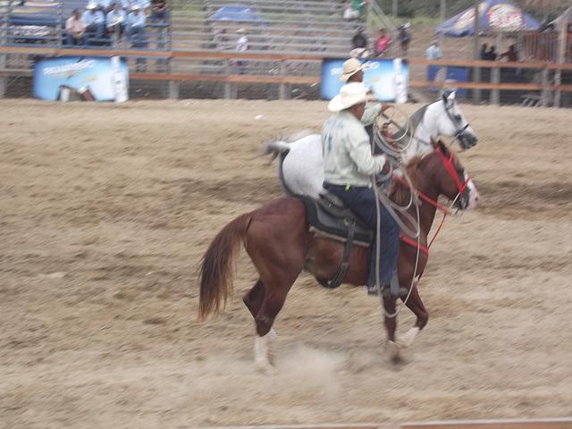 Cowboys et lassos.