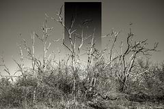 L'odyssée de l'espèce, monolithe #1