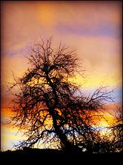 Le blues de l'arbre / The blues of the tree [ON EXPLORE]
