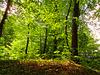 1 (28)...forest wald austria