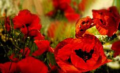 Fleurs des champs -
