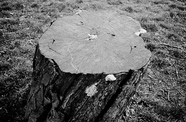 Snail trail, Ruskin Park SE5.