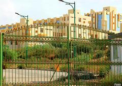 Université de Tlemcen.(Ma ville)