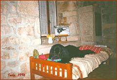 Indy, mon terre-neuve parti le 7 avril 2003. Chez moi c'est une règle: les animaux sont malheureux ! :o))