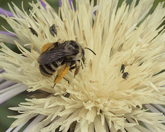 DSC0062 pollinators