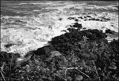 Coast, Gower.