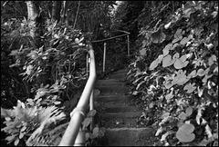 Steps, Gower.