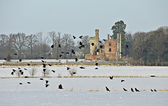 Stone the Crows its Haverholme Priory