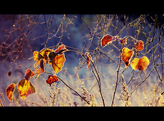 The first frost....