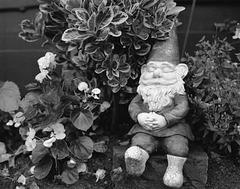 Alf Resco, the little garden elf