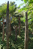 Driftwood grove