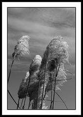 Dans le sens du vent