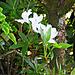 Flowering Unseen.