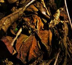 Leaf Litter 3