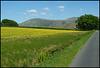 Cumbrian field of gold