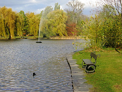 Coot, Bench & Fountain