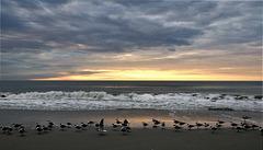 Seagulls awakening / Lever de mouettes