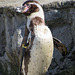 Penguin relaxing in the sun