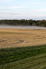 Alberta Field at Harvest Time