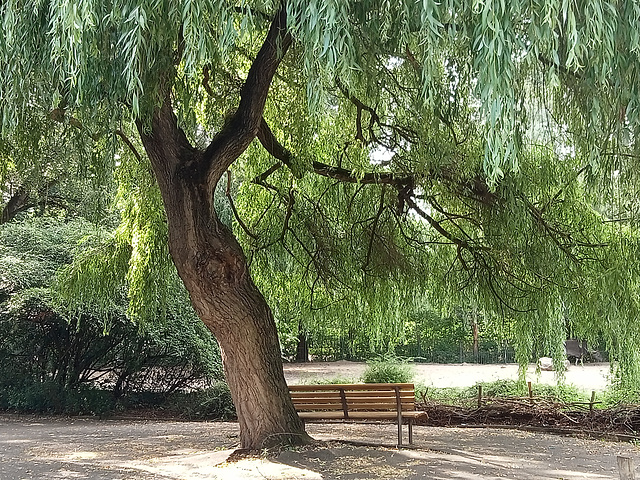 Ich liebe Bäume...