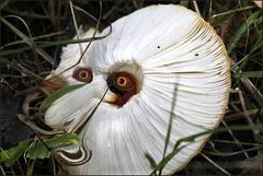 Fungi Troll