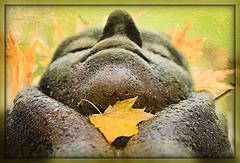 kleine Herbstwelt 8