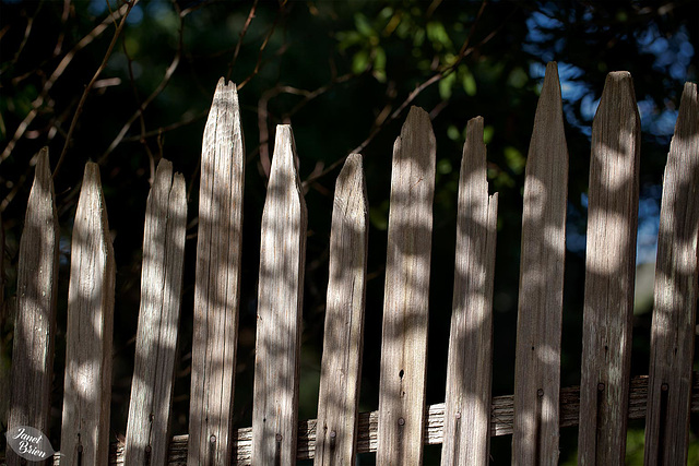 Pictures for Pam, Day 63: Happy Fence Friday!