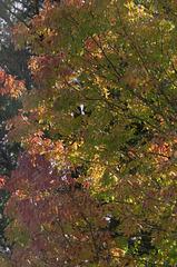 Colors of Autumn ...