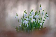 New Born Spring...