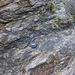 Nolton Haven sandstone channel edge lag deposits 1