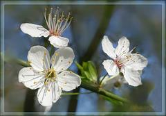 Ein Frühlingsgruss an alle Fotofreunde(dinnen)
