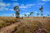 Walking...North Queensland