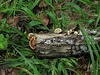 Fungi on a Log