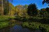 Ma balade du jour dans le marais du Moulin de la Porte ( Pithiverais )