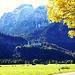 Herbst rund um Neuschwanstein. ©UdoSm