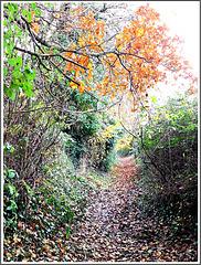 Couleurs d'automne dans le chemin