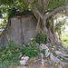 Arbre rocheux / Rocky unusual tree