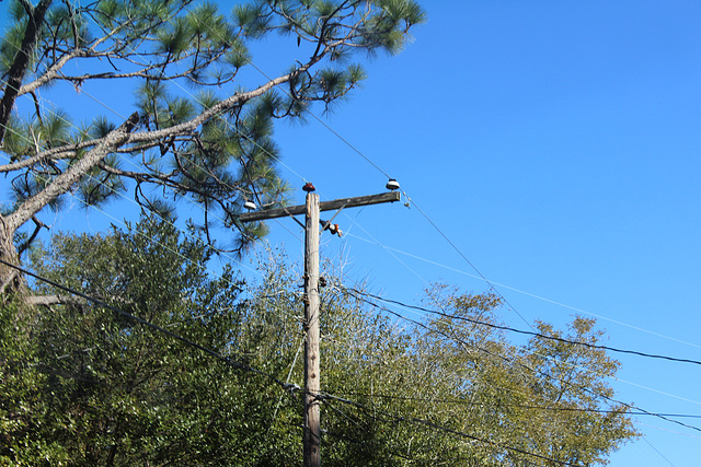 Gulf Power 12.47kV - Crestview, FL