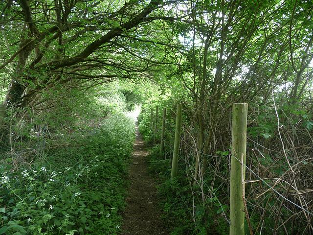 HFF from a Buckinghamshire footpath near csp
