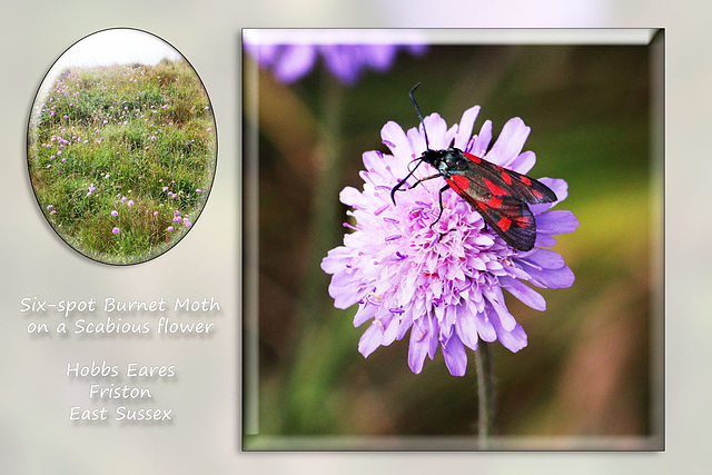 A Six-spot Burnet Moth - Friston - Sussex - 22.7.2015