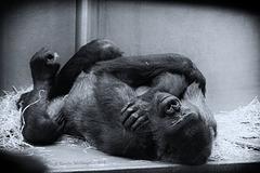 Mimi schläft (Wilhelma)