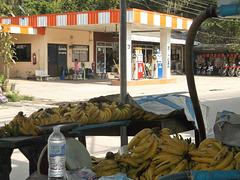Les bananes sont l'essence de la vie