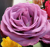 Une rose pour Pam et vous tous / A rose for Pam and you all