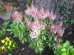 Unbekannte Blüte - nekonata floro
