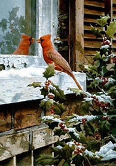 Our Winter Colour.